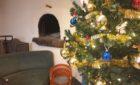 25 décembre – Noël